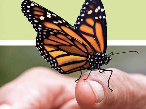 Mơ thấy bướm đánh con gì trúng lớn - Giải mã giấc mơ thấy bướm