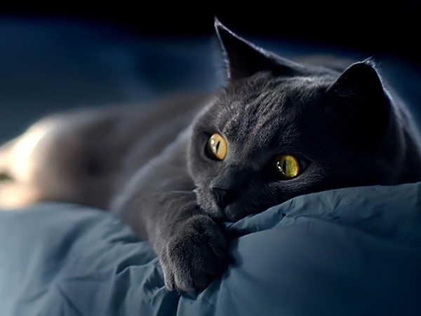 Mơ thấy mèo đen là điềm xui hay lành, nên đánh con số mấy?