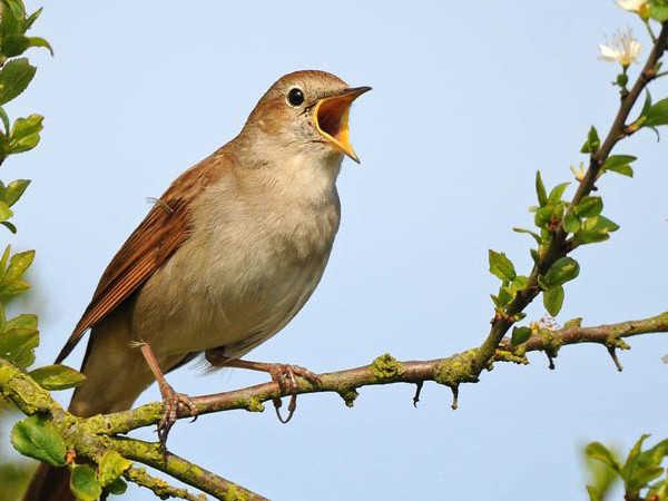 Mơ thấy chim là điềm dữ hay lành - Đánh con số nào may mắn?