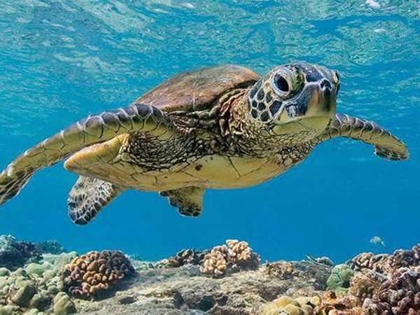 Giải mã giấc mơ thấy rùa, nên đánh con số nào chắc chắn ăn lớn?
