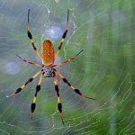 Chiêm bao mơ thấy con nhện là điềm báo hên hay xui ?